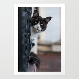 Curious Black and White Cat Art Print