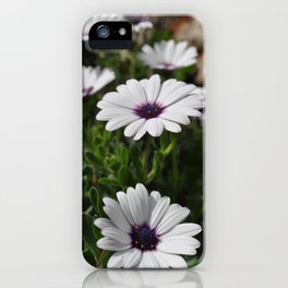 Margherite flovers iPhone Case