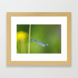 Lovely Blue Damselfly Framed Art Print