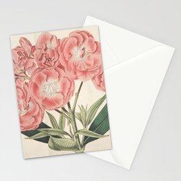 Flower 074 nerium odorum Double sweet scented Rosebay or Oleander20 Stationery Cards