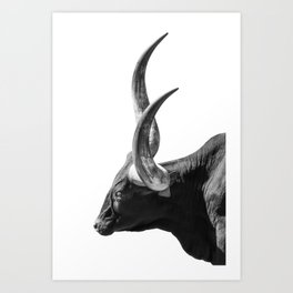 Ankole-Watusi | Animal Photography Art Print