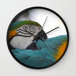 Macaw Mischief #1 captured by JoAnne DiLorenzo Wall Clock