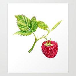 Raspberry, Fruit, Forest, Nature, Leaf, Berry, Sun, Summer, Happy Art Print