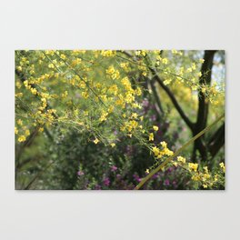 Yellow Palo Verde Blossoms on Purple Texas Ranger Flowers in Background Canvas Print