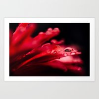 erotic Art Prints featuring Erotic Gerbera by Tomas Hudolin