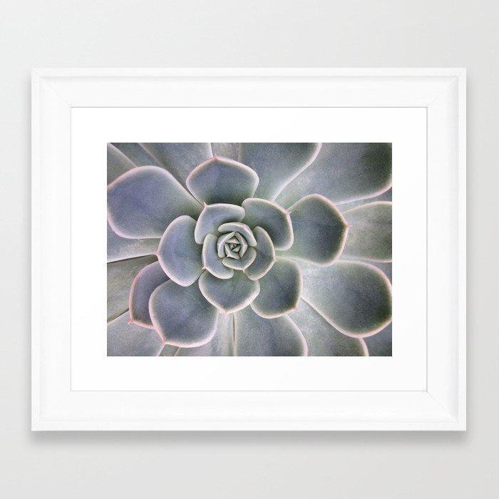 Succulent Leaf Close Up Photography | Plant | Cactus | Botanical ...