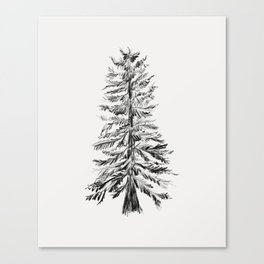 Cedar Tree Canvas Print