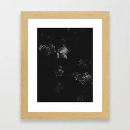 Cold Roses (I) Framed Art Print