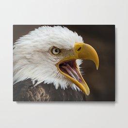 Alder Eagle Metal Print