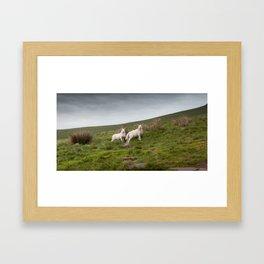 Welsh lambs in Brecon Framed Art Print