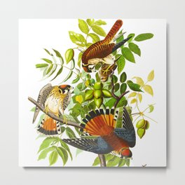 Sparrow Vintage Scientific Bird & Botanical Illustration Metal Print