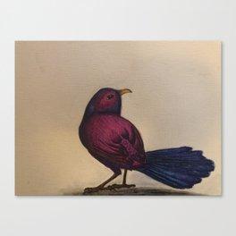 Fuchsia Bird Canvas Print