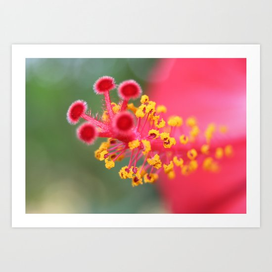 Macro Close Up Of Hibiscus Pollen  Art Print
