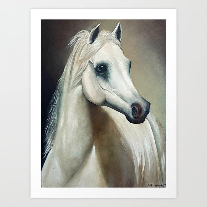 Arabian White Horse Portrait Art Print