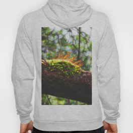 Beautiful abstract moss in rain forest Hoody