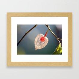 Japanese Lantern Flower Fruit Close up Framed Art Print