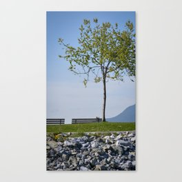 Harbour Trees Canvas Print