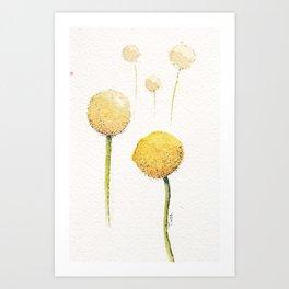 Watercolour Billy Buttons  Art Print
