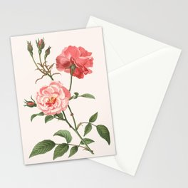 Rosa Semplerflorens Stationery Cards