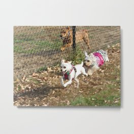 Two dogs running fast Metal Print