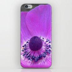 purple anemone iPhone & iPod Skin