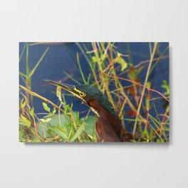 Green Heron Portrait Metal Print