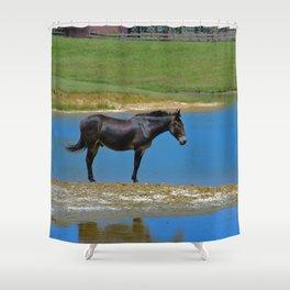 Black Horse. Animal. Pennsylvania Shower Curtain