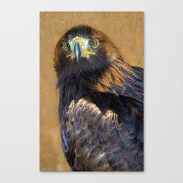 Scottish Golden Eagle Canvas Print