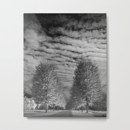 Rows of Autumn Trees with Cirus Cloudy Sky in Black & White in Michigan Metal Print