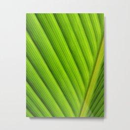 Sunlit palm leaf close up Metal Print