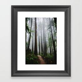 Forest Park Framed Art Print