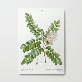 Clammy locust (Robinia viscosa) from Traité des Arbres et Arbustes que l'on cultive en France en ple Metal Print