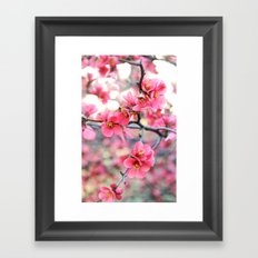 Evening Quince Framed Art Print