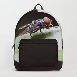 Blue Fly Backpack