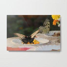 Butterfly Feeding Metal Print
