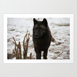 Wolves II  Art Print