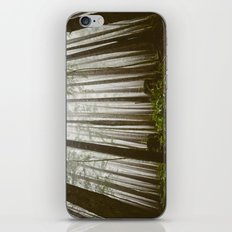 Rainforest of the Pacific Northwest iPhone & iPod Skin