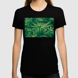 Marijuana Plants  T-shirt