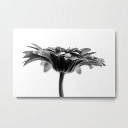Gerbera 4 Metal Print
