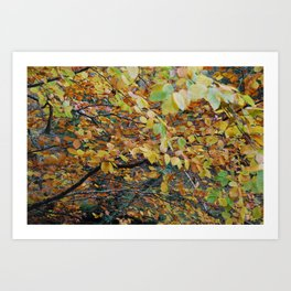 Autumnal Leaves Art Print