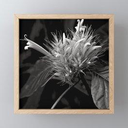 Bizarre Flower Charm Framed Mini Art Print