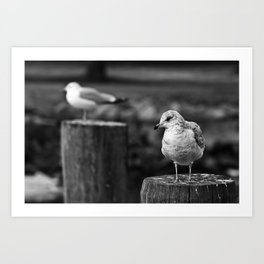 Silent Treatment - Photo Art Print