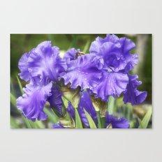 Purple Bearded Irises Canvas Print
