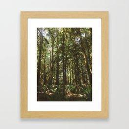 Deer in Olympic Forest Framed Art Print