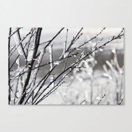 Frozen winter branches Canvas Print