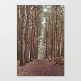 Avenue of Trees Canvas Print