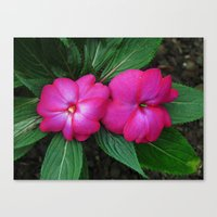 hot pink Canvas Prints featuring Hot Hot Pink by Nevermind the Camera