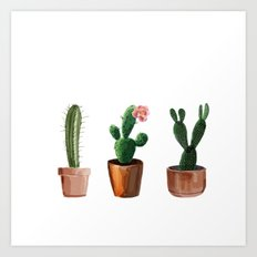 Three Cacti On White Background Art Print