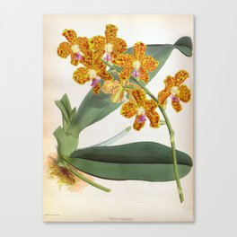 Vanda Parishii Orange Speckled Lindenia Orchid Canvas Print