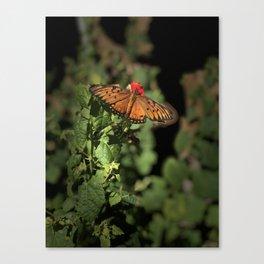 Butterfly Portrait Canvas Print